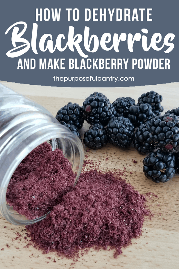Berry season is short and sweet, so don't forget to stock up on more to make sure you can dehydrate blackberries and save them for snacking or to make blackberry powder! I'll show you how with this easy step by step tutorial which is also great for doing other kinds of berries, too!