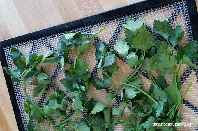 Dehydrate parsley, parsley on excalibur dehydrator tray