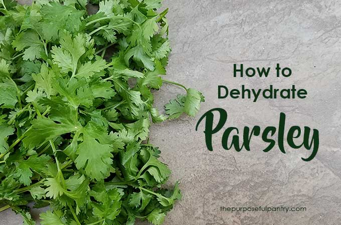 "parsley bunch on a cutting board with text ""How to Dehydrate Parsley by The Purposeful Pantry.com"""