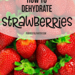 How to Dehydrate Strawberries - dry your strawberries for a taste of summer all year long.