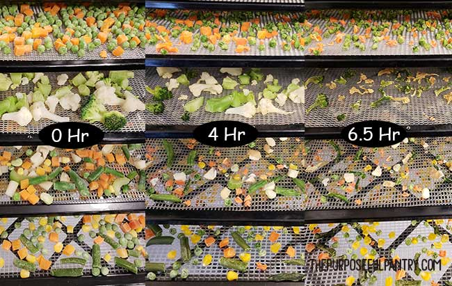 Excalibur dehydrator trays of frozen vegetables in various stages of drying.