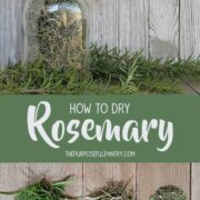 Dried Rosemary in an antique glass canning jar surrounded by fresh rosemary on wooden backgrounds