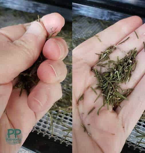 Side by side comparison of crushing dried rosemary and what it should look like.