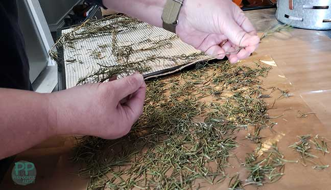 Two hands pulling dried rosemary needles from stem onto a nonstick dehydrator mat.
