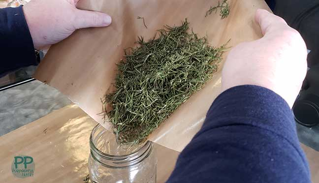 Nonstick deydrator mat full of dried rosemary being poured in a glass mason jar for storage.