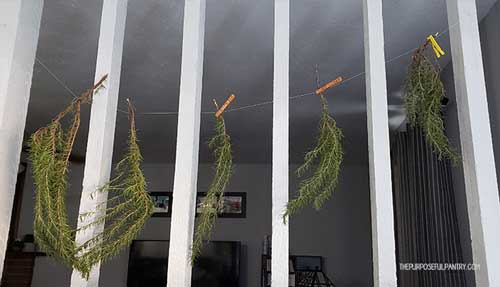 Branches of rosemary hung on a string across a white columned room divider with clothespins