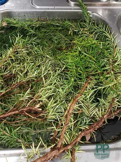 Fresh rosemary stems and branches in a stainless steel sink under water - being washed.