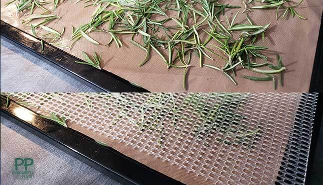 Side by side comparison of rosemary needles on dehydrator tray covered with mesh, ready to be dried.