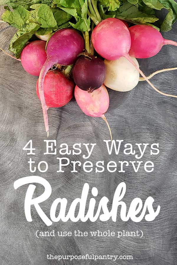 A bunch of radishes on a gray countertop being preapred to preserve radishes