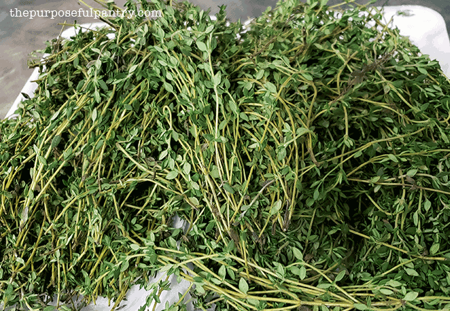 Fresh thyme being prepared to dehydrate