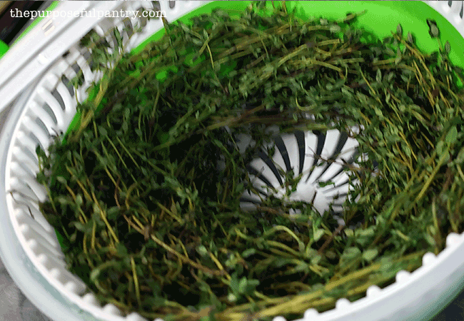 Salad spinner full of freshly washed thyme ready to be dehydrated