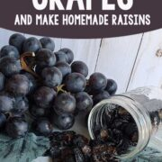 Fresh grapes, dehydrated grapes (raisins) in a mason jar on a wooden background.