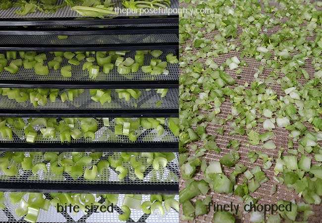 Dehydrated celery on Excalibur dehydrating trays