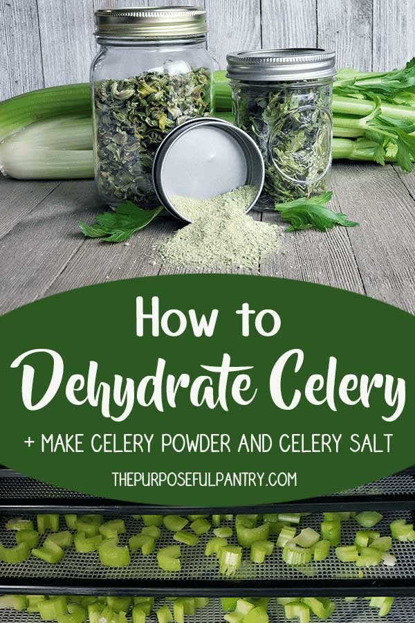 Jar of dehydrated celery with a container of homemade celery salt, with celery on dehydrator trays