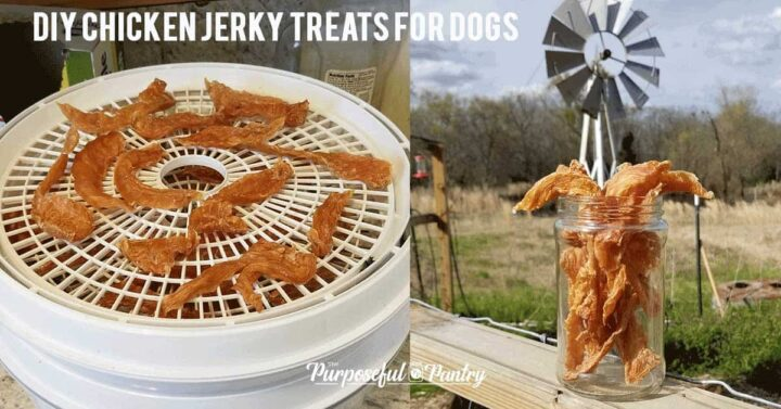 Chicken treats for dogs on a Nesco Dehydrator, and chicken jerky in a mason jar on a farm fence