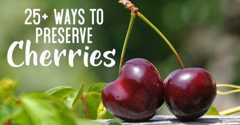 2 cherries on stem