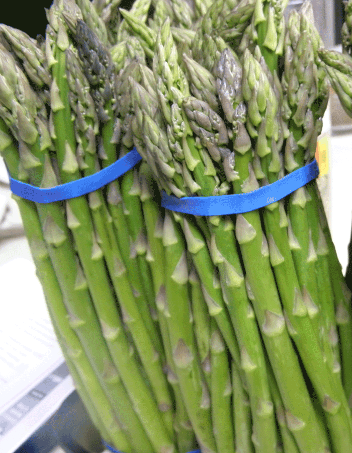 2 bundles of asparagus wrapped by blue band - to be dehydrated