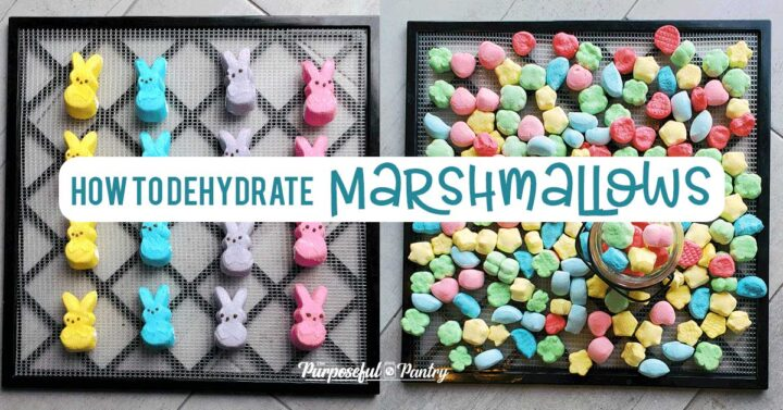 Excalibur Dehydrator tray of Peeps and Lucky Charm marshmallows