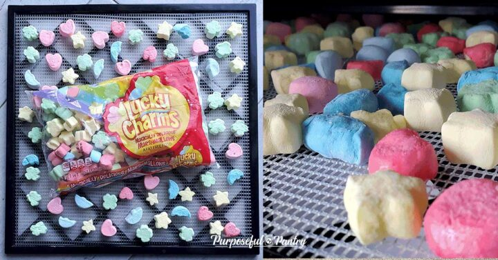 Excalibur dehydrator tray of lucky charms marshmallows before and after