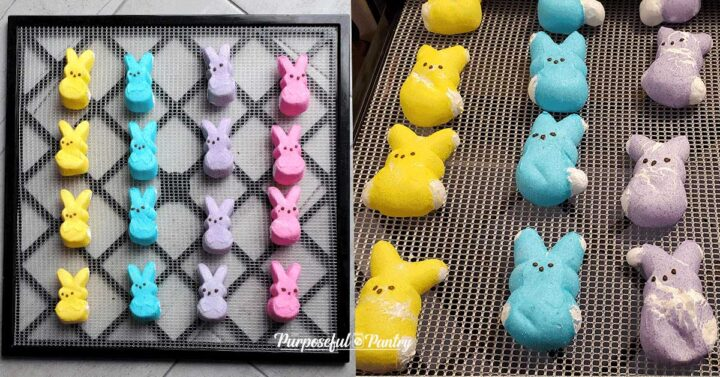Excalibur dehdyrator trays with Peeps before and after - dehydrated marshmallow peeps