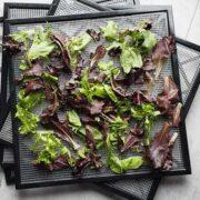 3 Excalibur Dehydrator trays of fresh spring mix lettuce