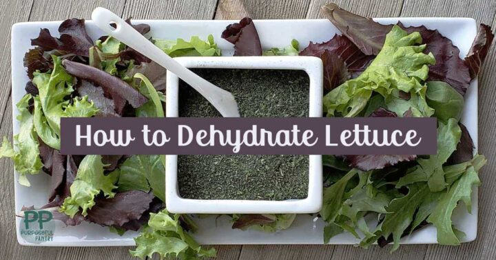 White tray of fresh spring mix lettuce and container of dehydrated powdered lettuce