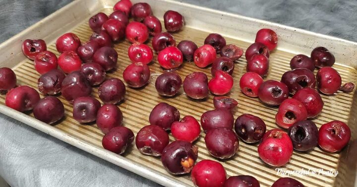 Pitted whole cherries on cookie sheet for freezing