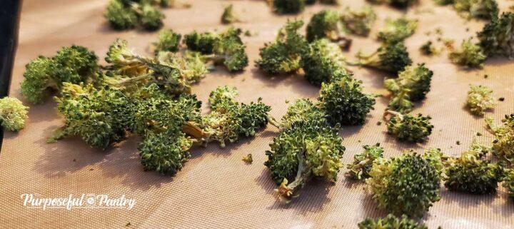 Dehydrated broccoli florets on Excalibur Dehydrator tray
