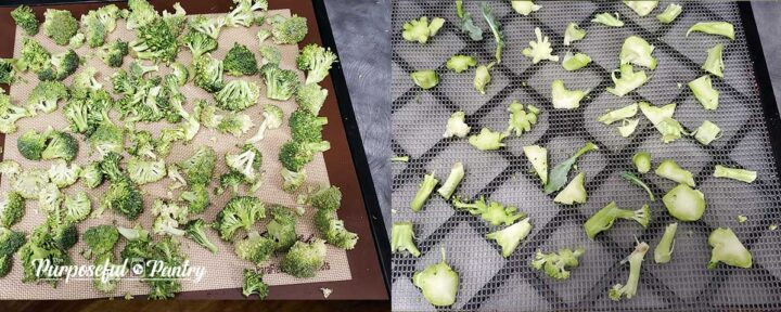 Broccoli florets and sliced stems on Excalibur dehydrator trays to dry