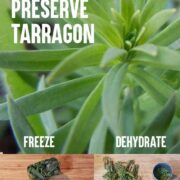 Fresh Taragon on top of an image of frozen tarragon and dehydrated taragon