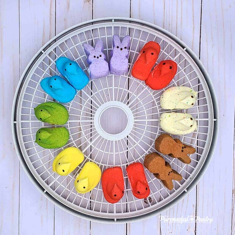 Marshmallow Peeps in rainbow order around a Nesco dehydrator tray