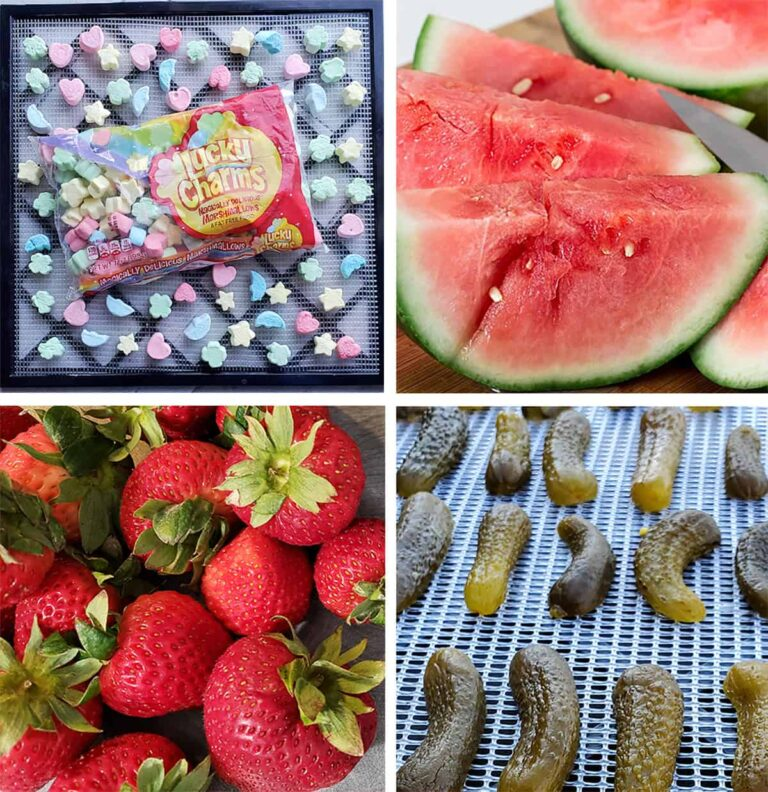 Dehydrated marshmallows, watermelon, strawberries and pickles for kids dehydrating projects