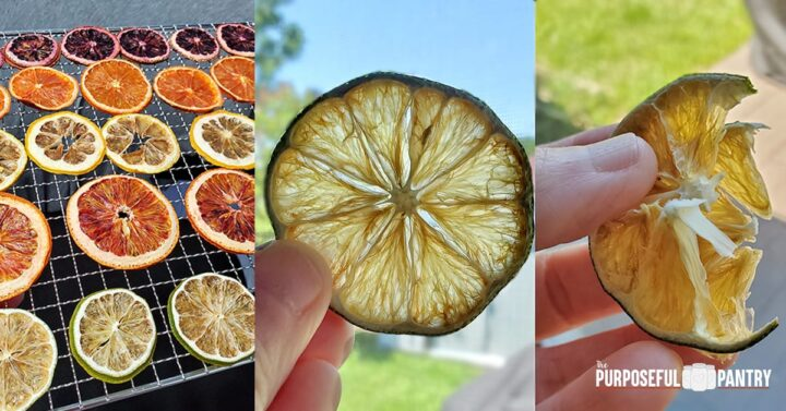 Dehydrated citrus rounds on a Cosori dehydrator tray and examples of what a dried lime slice looks like