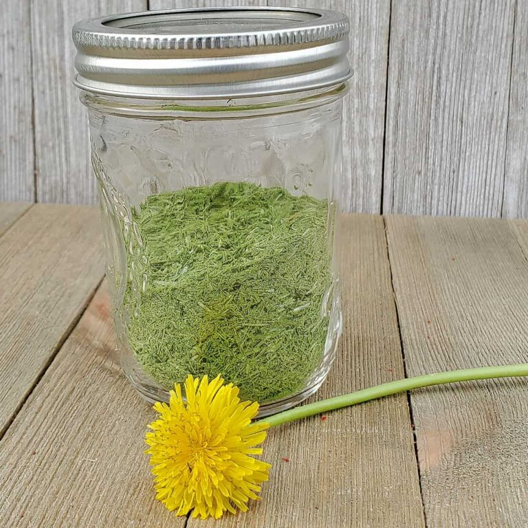 Glass jar of dehydrated wild onion grass with a dandelion flower on wooden background for dehydrating backyard weeds