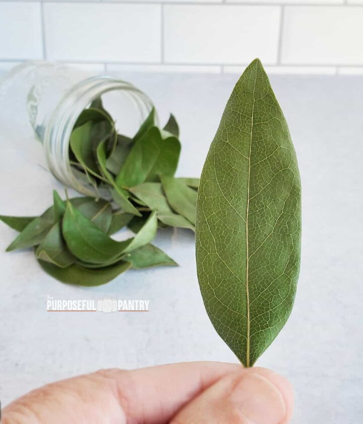 Dried bay leaf in the foreground with a jar of dried bay leaves on a kitchen countertop