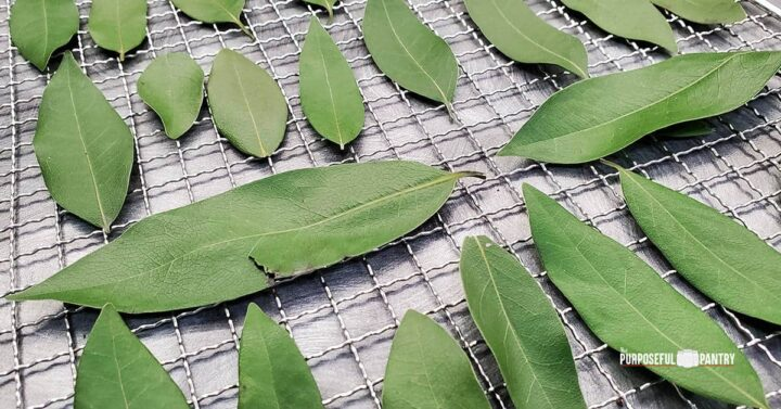 Bay leaves on a Cosori dehydrator tray being prepared for dehydrating