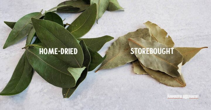A stack of dense green home-dried bay leaves next to a stack of weak and sad storebought leaves