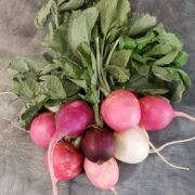 A bundle of rainbow radishes in varying shades of red, pink and white