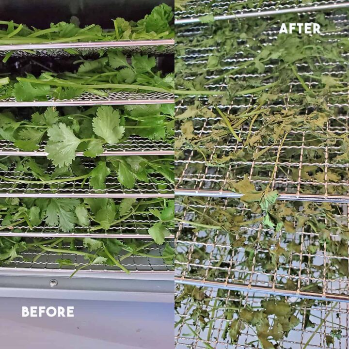 A before and after look at fresh and dried cilantro in a Cosori dehydrator