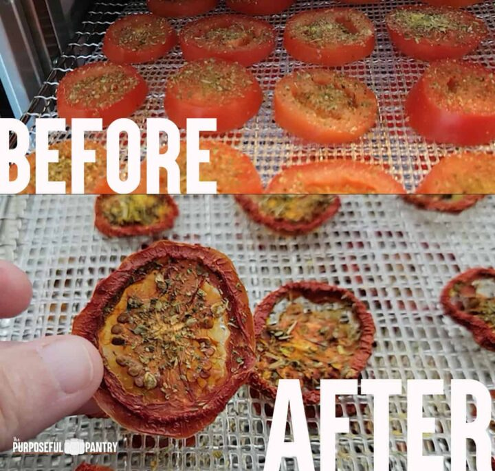 Fresh tomatoes on a Cosori dehydrator tray before, and the dried chip after